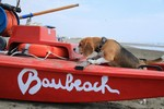 Bau beach project: on the beach resort with your dog.